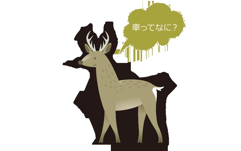 エゾシカってこんな動物