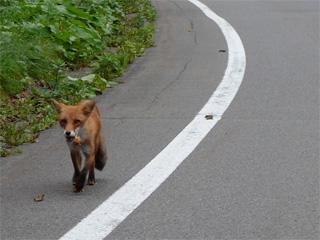 野生生物事故目撃報告